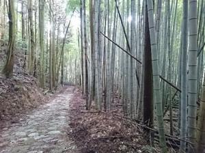 Hiyamizu15